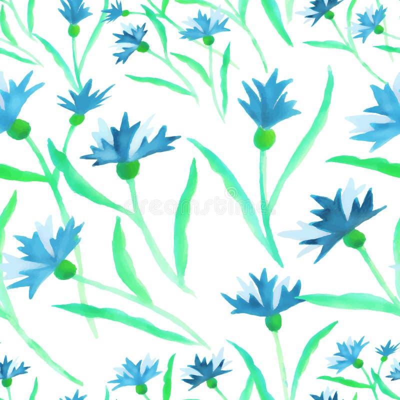 Beira azul da centáurea da aquarela do teste padrão no branco ilustração royalty free