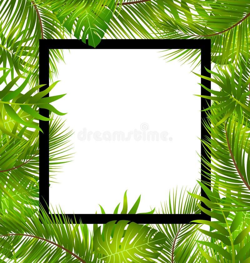 Beira bonita com folhas de palmeira tropicais ilustração do vetor