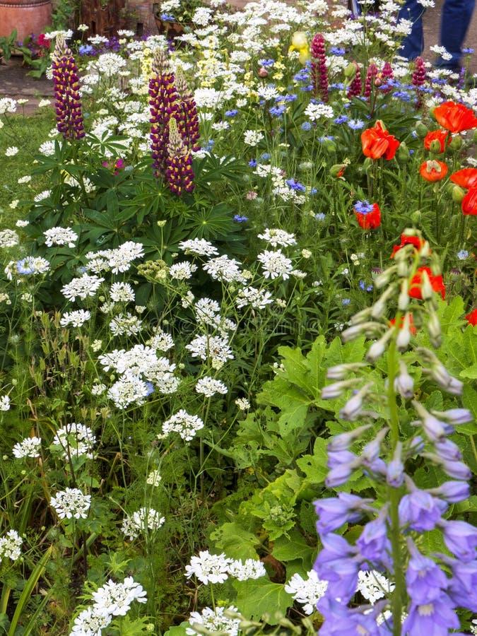 Beira BRITÂNICA do jardim da casa de campo do verão colorido fotos de stock royalty free