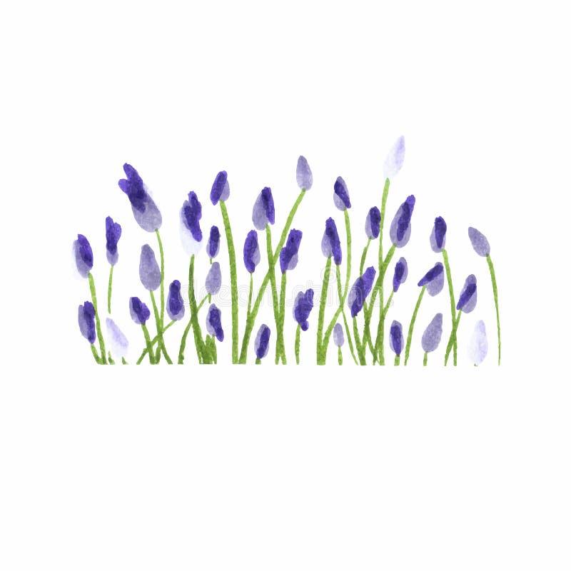 Beira da alfazema Floral tirado mão da aquarela ilustração stock