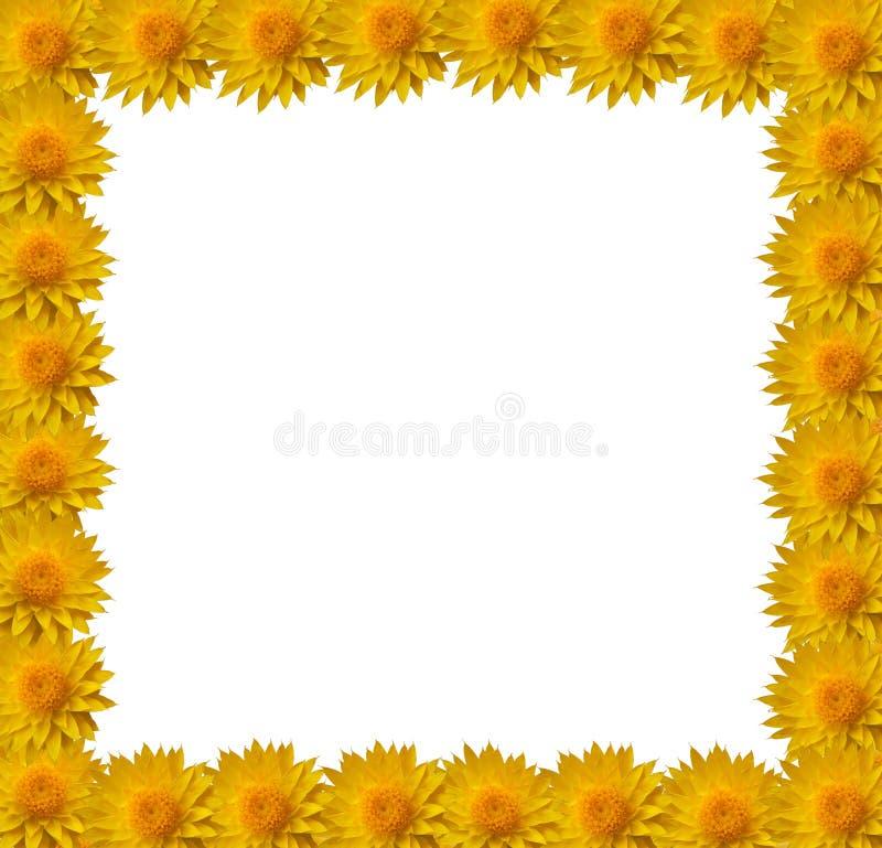 Beira da flor ilustração royalty free