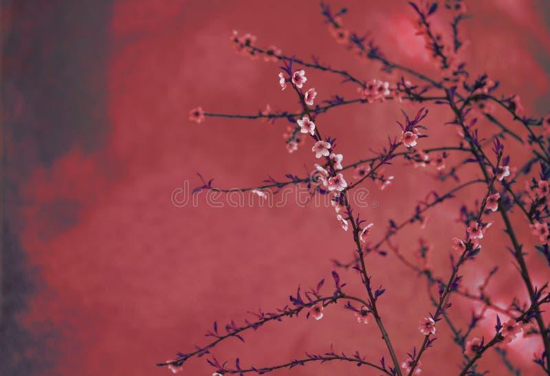 Beira da flor da mola sobre fundo textured dos arty vermelhos Projeto chinês do vintage da natureza do ano novo fotos de stock royalty free