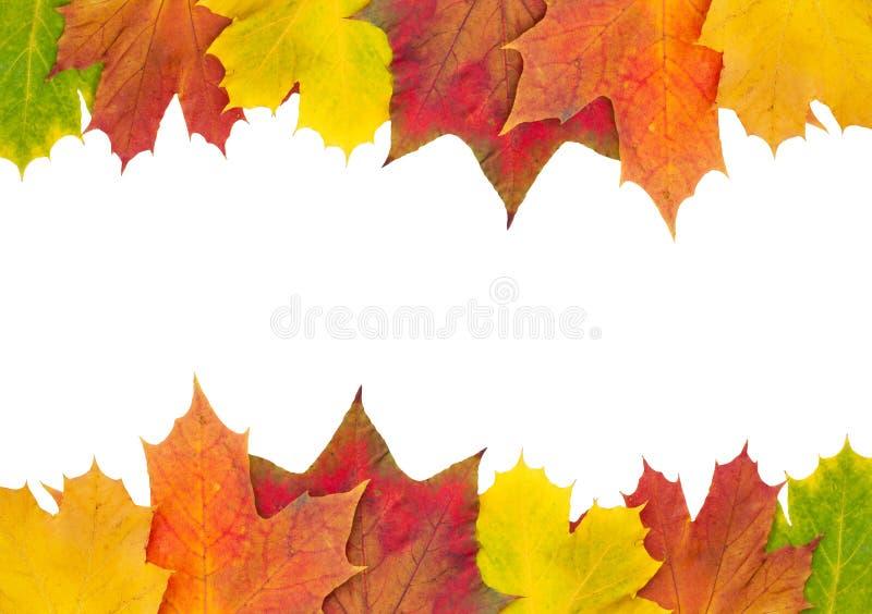 Beira da folha de bordo do outono imagens de stock royalty free