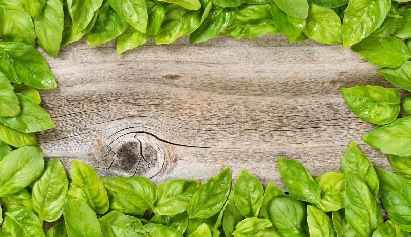 A beira da grande manjericão fresca folheia na madeira envelhecida imagens de stock royalty free