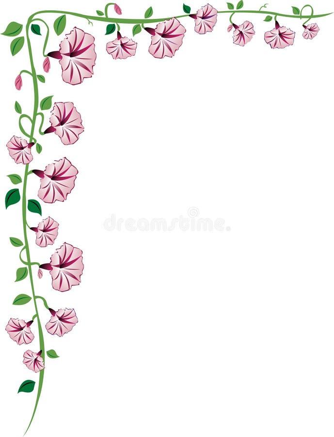 Beira da videira da glória da manhã, cor-de-rosa ilustração stock