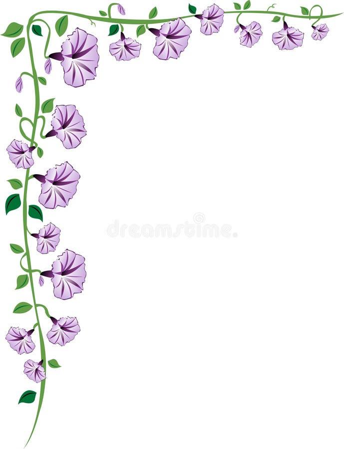Beira da videira da glória da manhã, roxa ilustração stock