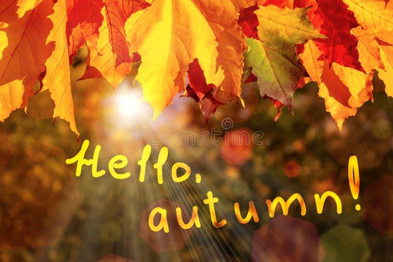 Beira das folhas de bordo do outono na floresta e na inscrição olá!, outono - um cartão bonito do outono fotos de stock royalty free
