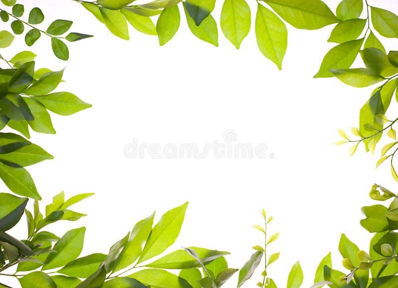Beira das folhas novas frescas imagem de stock