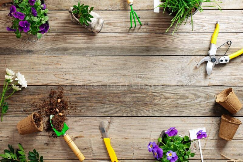 Beira de jardinagem com várias flores planta e ferramentas de jardim no fundo de madeira, configuração lisa, vista superior, espa imagem de stock royalty free