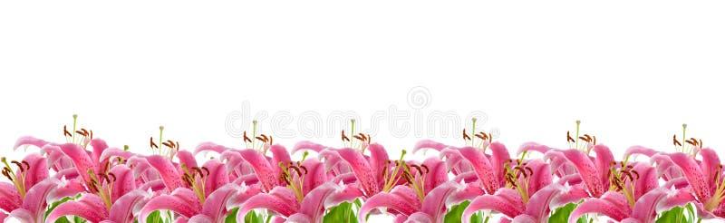 Beira de lírios cor-de-rosa fotos de stock royalty free