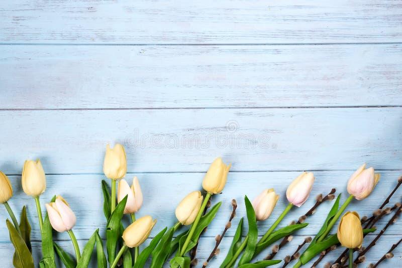 Beira de tulipas da mola com ramos do selo no fundo de madeira azul fotografia de stock royalty free