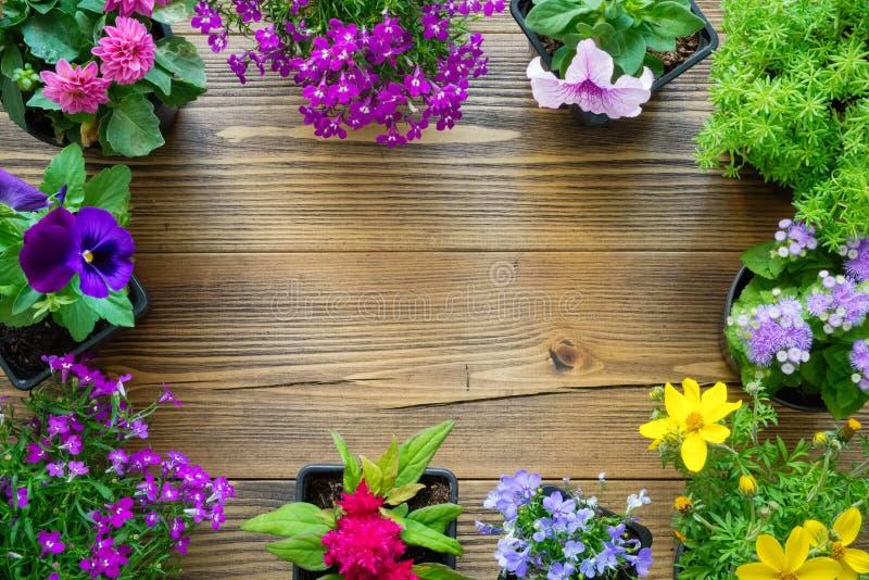 Beira decorativa das plântulas de plantas de jardim e de flores bonitas em uns potenciômetros foto de stock