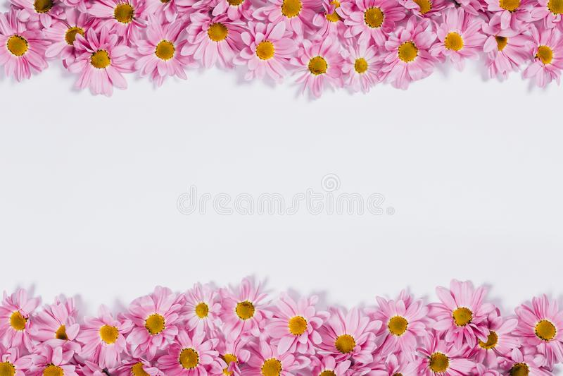 Beira decorativa superior e inferior feita dos botões de florescência da margarida foto de stock royalty free