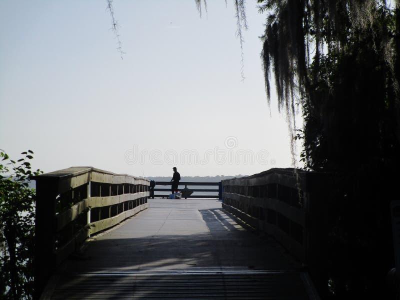 Beira do lago das árvores de Cypess foto de stock