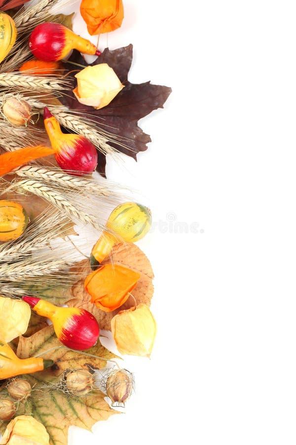 Beira do outono com abóbora colorida imagem de stock