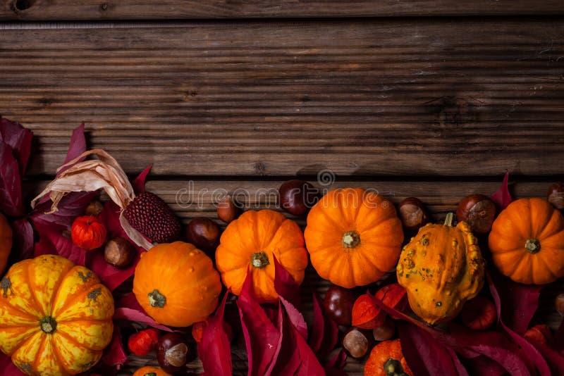 Beira do outono com abóboras e espaço da cópia imagens de stock
