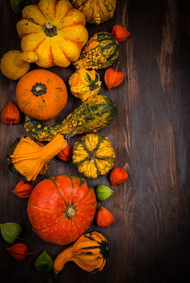Beira do outono com abóboras e espaço da cópia foto de stock royalty free