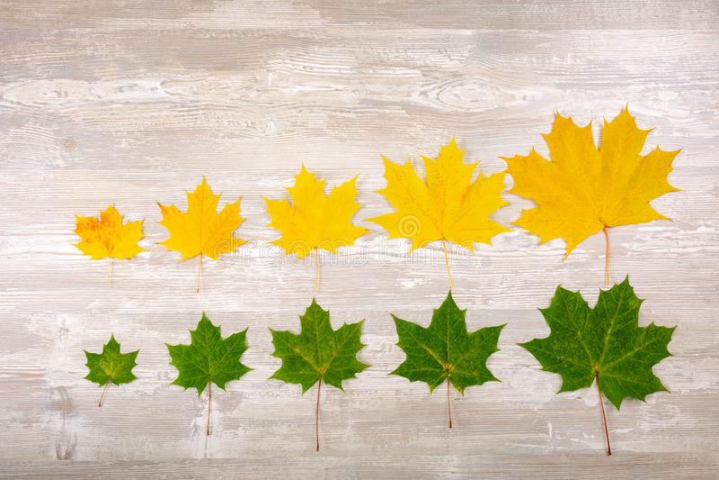Beira do outono das folhas de plátano caídas no fundo de madeira velho foto de stock