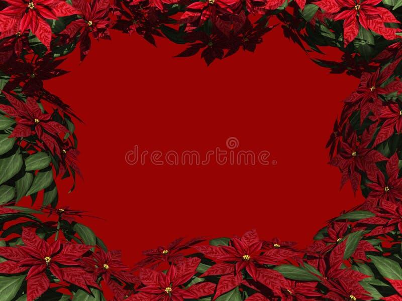 Beira do Poinsettia ilustração do vetor