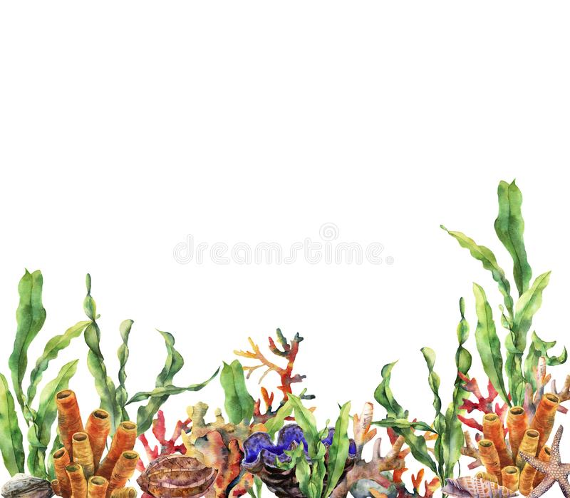 Beira do recife de corais da aquarela Ilustração subaquática pintado à mão com ramo do laminaria, estrela do mar, tridact, molusc ilustração stock