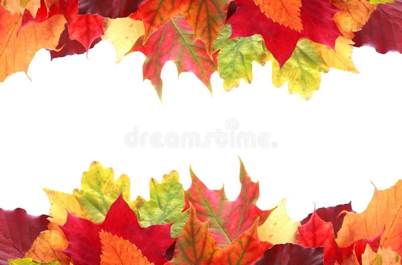 Beira dobro das folhas de outono coloridas vibrantes fotografia de stock royalty free