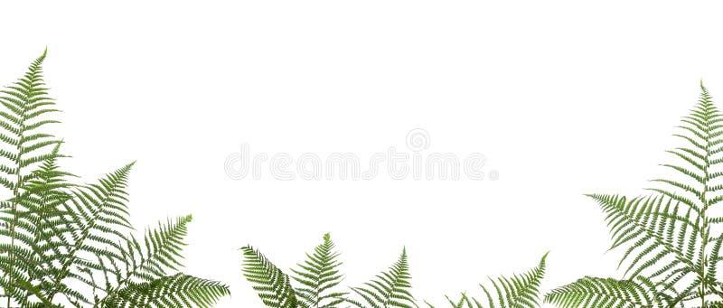 Beira dos ferns imagem de stock
