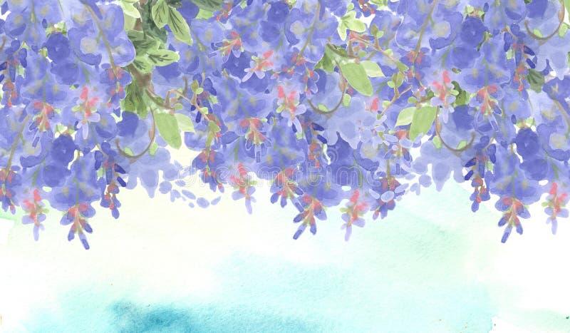 Beira dos ramos da glicínia violeta da tinta ilustração royalty free