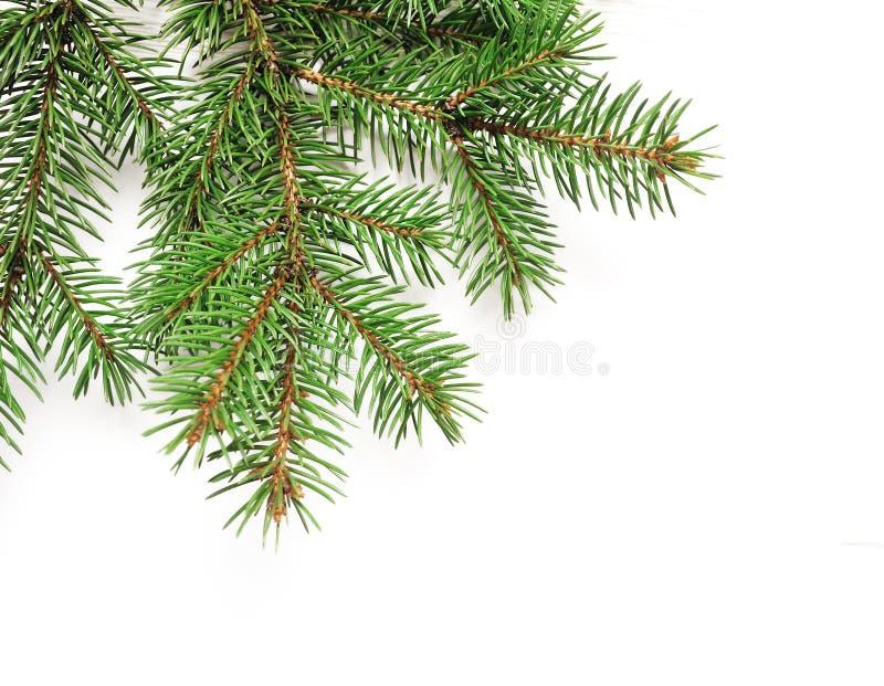 A beira dos ramos de árvore do Natal do modelo sobre o branco isolou o fundo, com espaço para seu texto imagens de stock royalty free