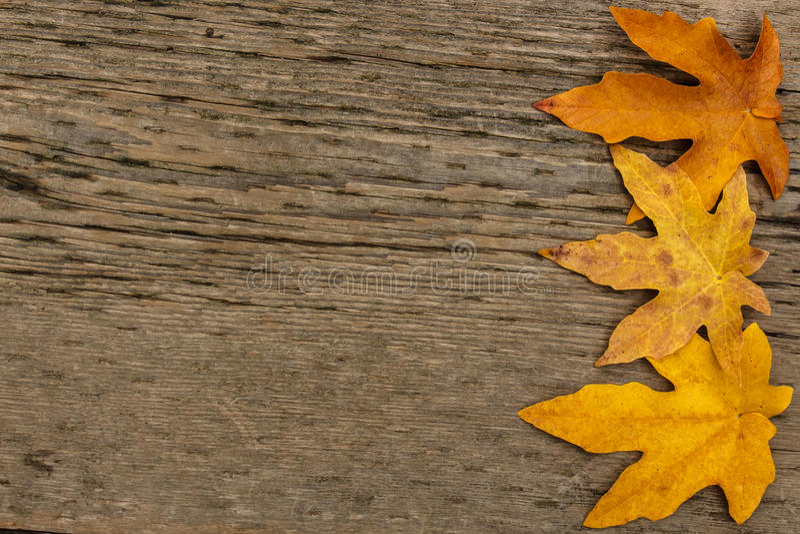 Download Beira Dourada Da Folha De Bordo No Fundo De Madeira Foto de Stock - Imagem de queda, conceito: 80100190