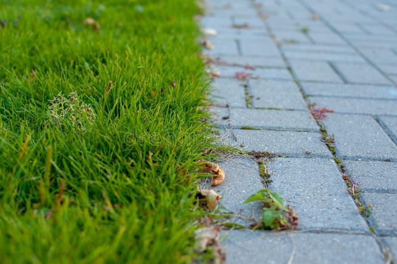 A beira entre o gramado e o pavimento foto de stock