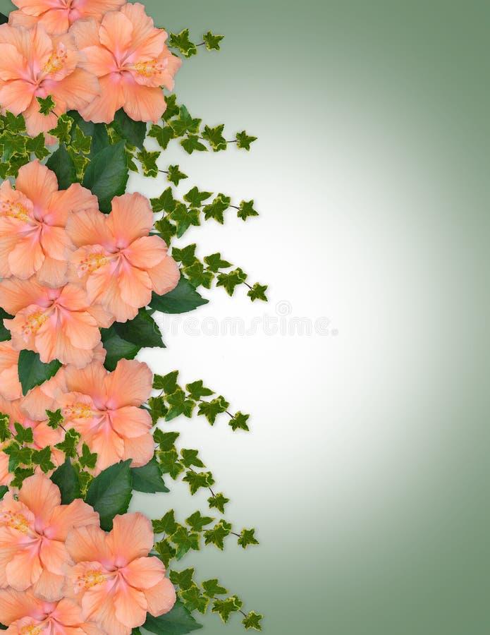Beira floral do pêssego do hibiscus ilustração stock