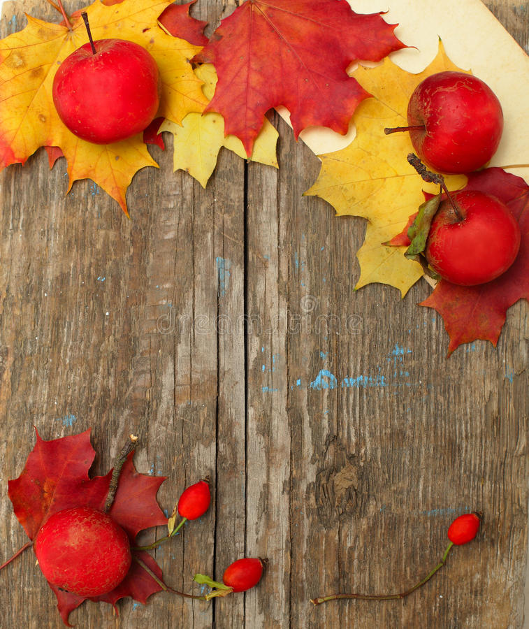 Beira - maçãs do outono, quadris cor-de-rosa e folhas fotografia de stock