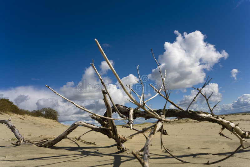 Beira-mar Báltico - uma duna fotos de stock