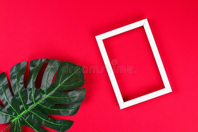 Beira preta branca do quadro da folha tropical do conceito das ideias do verão no fundo vermelho Espa?o da c?pia da vista superio fotografia de stock royalty free