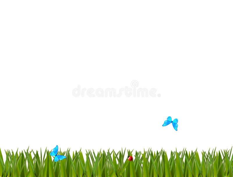 Beira realística verde da grama com joaninha e as borboletas azuis ilustração stock