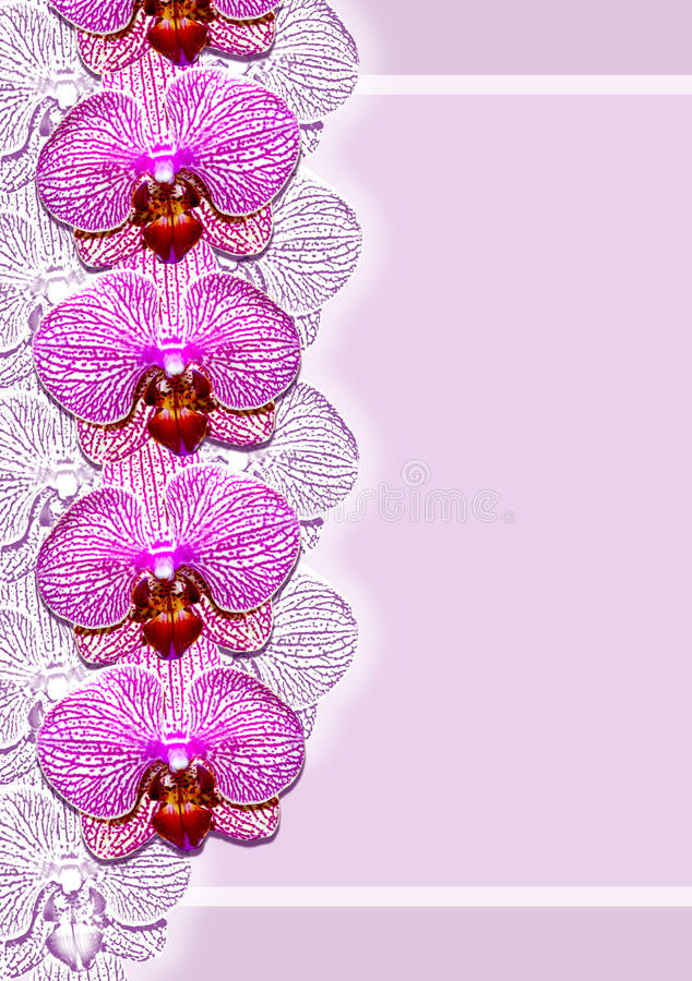 Beira roxa da orquídea imagem de stock
