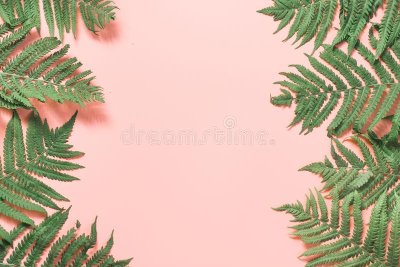 A beira sae da samambaia no rosa pastel Vista superior, espa?o da c?pia Fundo do ver?o fotografia de stock
