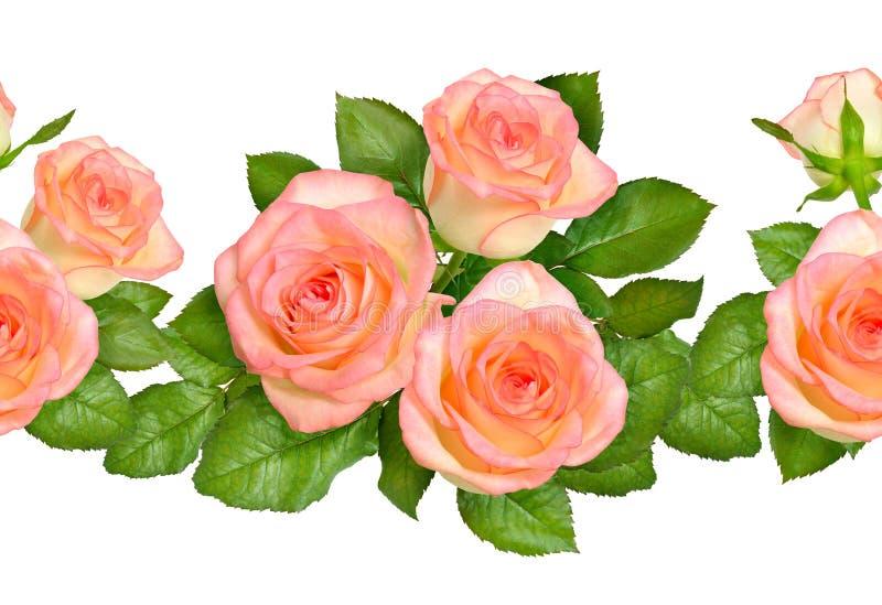 Beira sem emenda com rosas cor-de-rosa Isolado no fundo branco ilustração do vetor