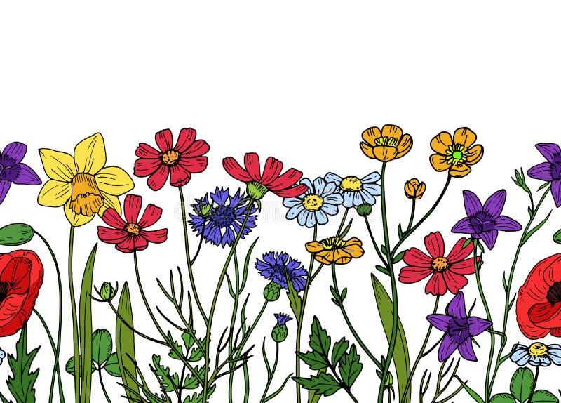 Beira sem emenda das flores selvagens Campo do papel de parede floral do vetor da mola do vintage da erva do prado ilustração stock