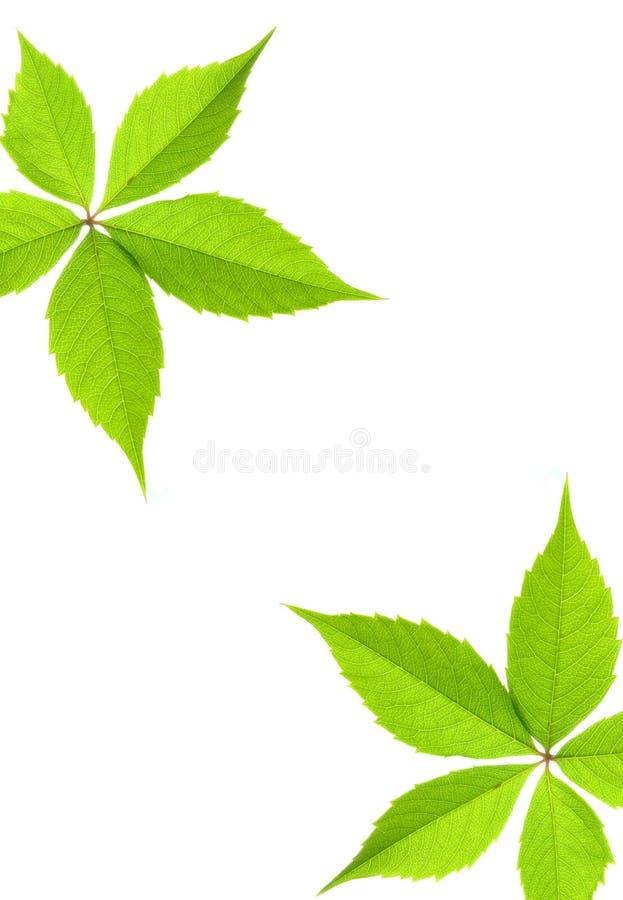 Beira verde da folha foto de stock