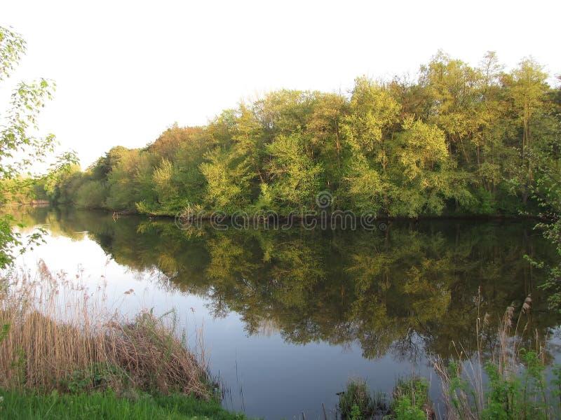 Beira verde do banco de rio fotografia de stock royalty free