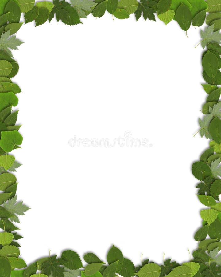 Beira verde vertical da folha imagem de stock royalty free
