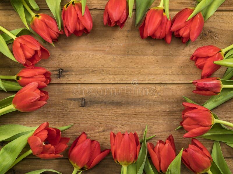 beira vermelha das tulipas fotos de stock