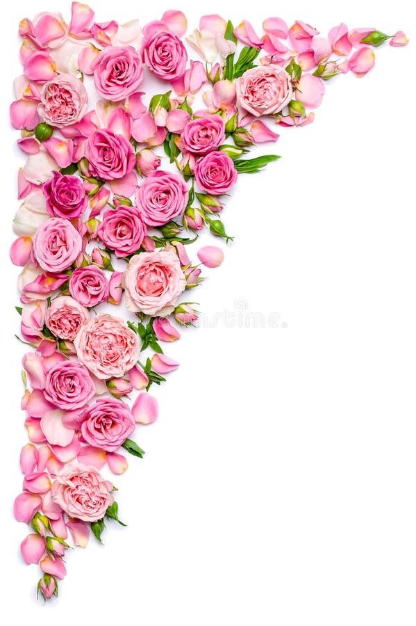 Beira vertical de rosas frescas em um fundo branco Casamento ou tema do dia de Valentim fotos de stock