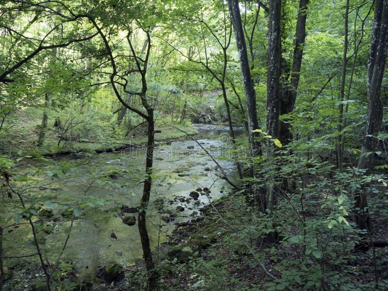 Beiu flod på den Cheile Nerei nationalparken, Rumänien arkivfoton