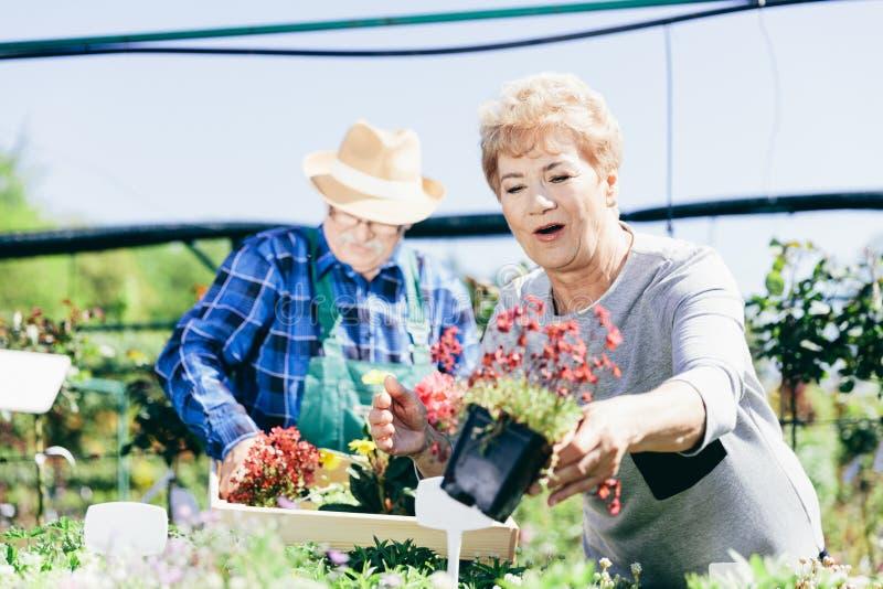 Bejaard paar die de bloemen plukken royalty-vrije stock fotografie
