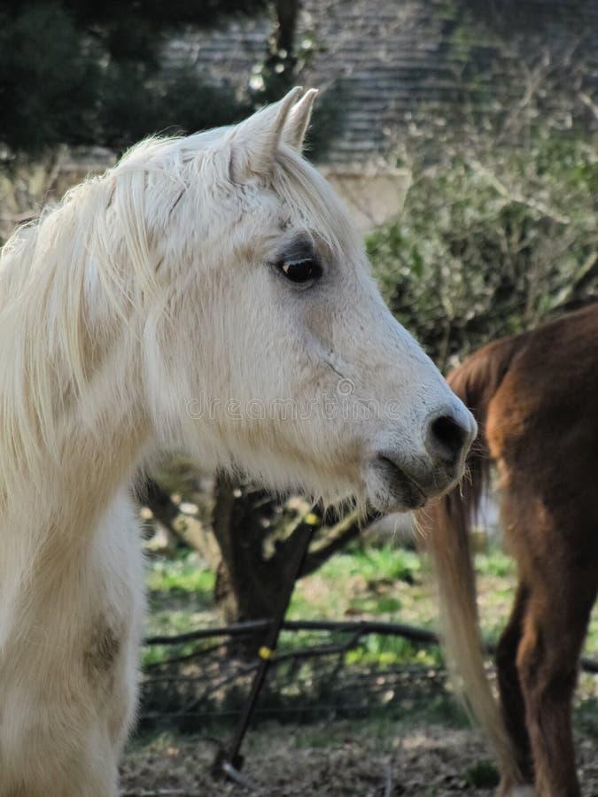 Bejaard Paard in Profiel op Landbouwbedrijf royalty-vrije stock afbeeldingen