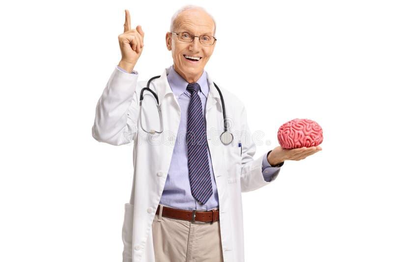 Bejaarde arts die en een hersenenmodel benadrukken houden royalty-vrije stock foto's