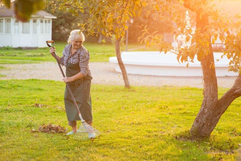 Bejaarde die met hark werken stock foto's