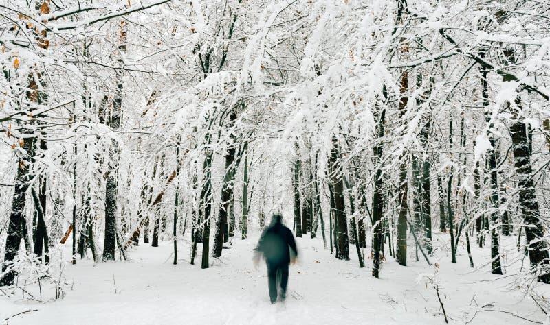 Bejaarde die in sneeuwbos lopen stock afbeeldingen